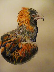an eagles gaze
