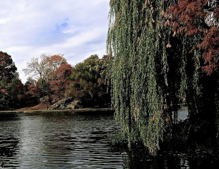 Harlem Meir  Central Park - Edsimages