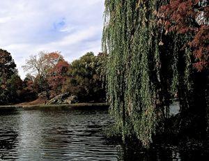 Harlem Meir  Central Park