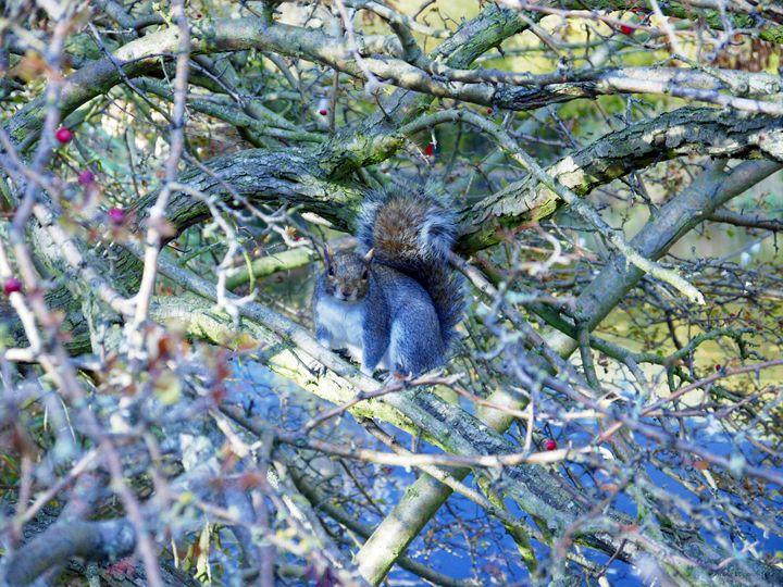 Squirrel - All Men Must Paint