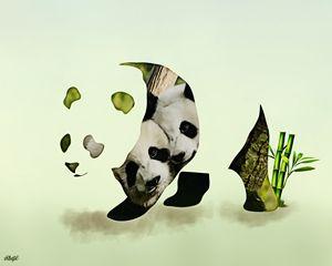 Panda's Love - Photo Design AJ