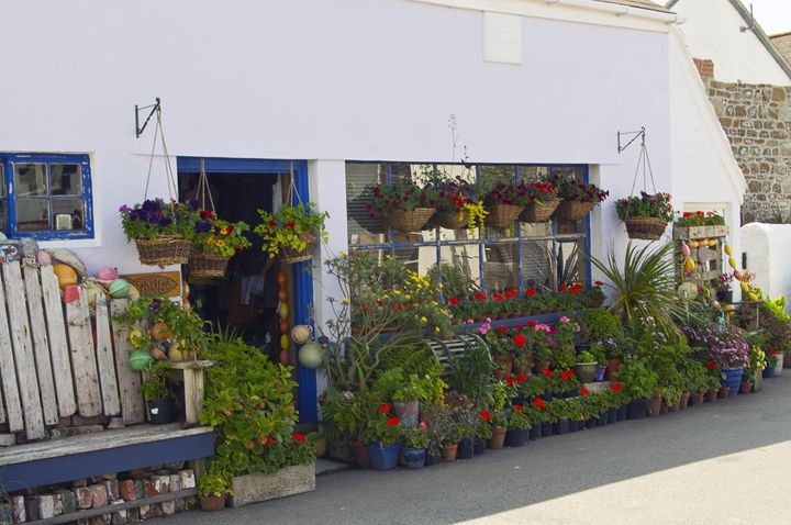 The flower shop - Pluffys portfolio