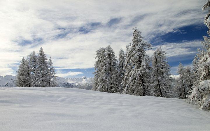 Snowy trees and wintry sky - Pluffys portfolio