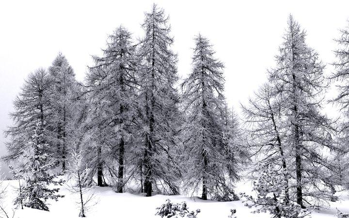 Trees - Pluffys portfolio