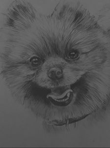 Custom pet portrait from your photo