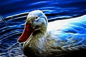 Electric Duck