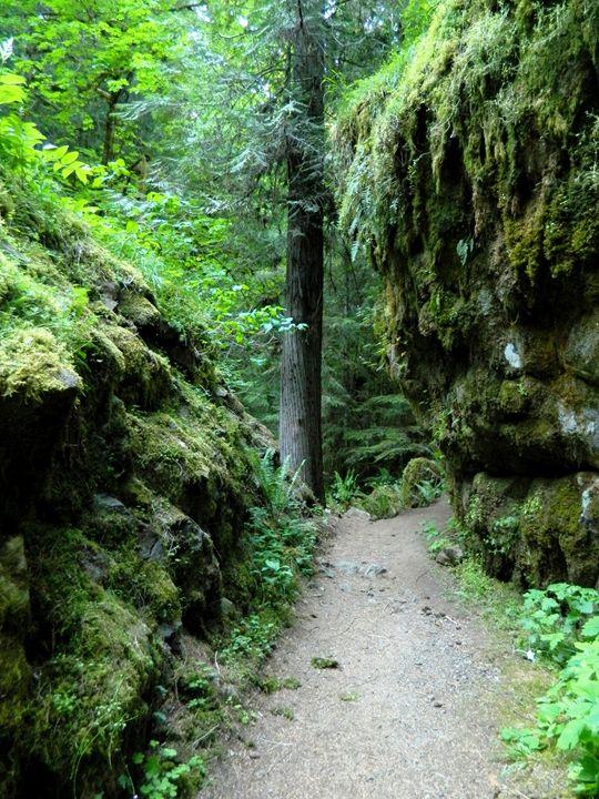 Fall Creek Path - Markell Smith Gallery
