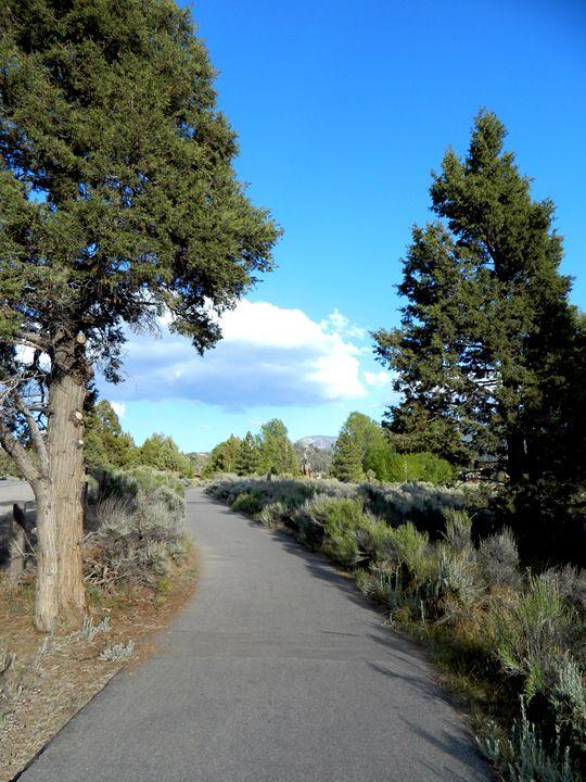 The Big Bear Path - Markell Smith Gallery