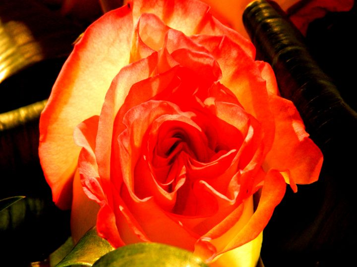 The Orange Rose - Markell Smith Gallery