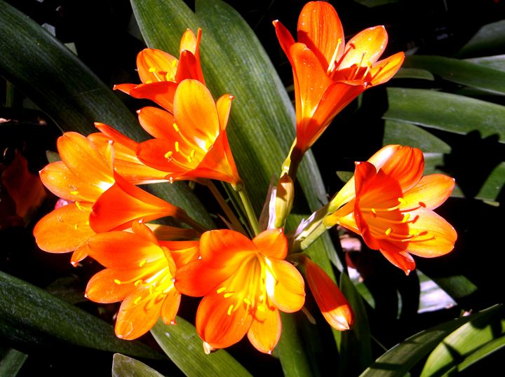 Orange in the Garden - Markell Smith Gallery