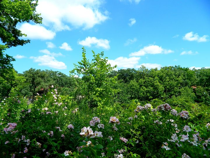 The Garden at Minnehaha Falls - Markell Smith Gallery
