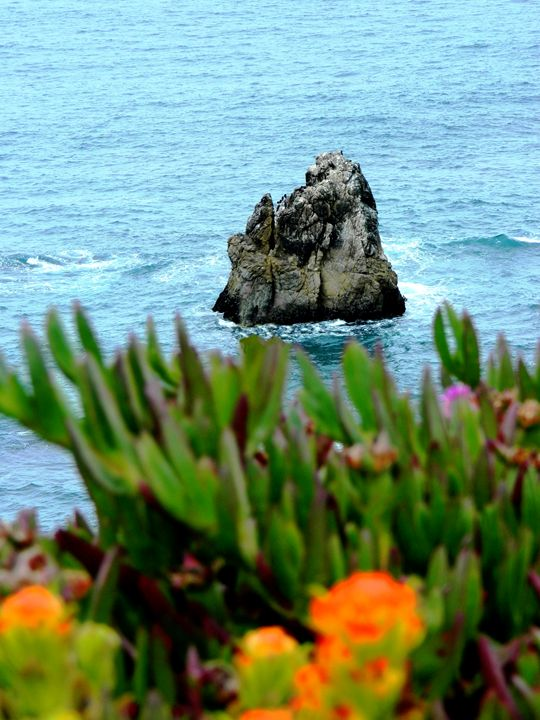 the Coastal Rock - Markell Smith Gallery