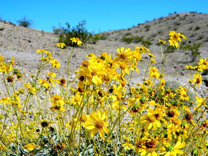 The Desert Wildflower - Markell Smith Gallery