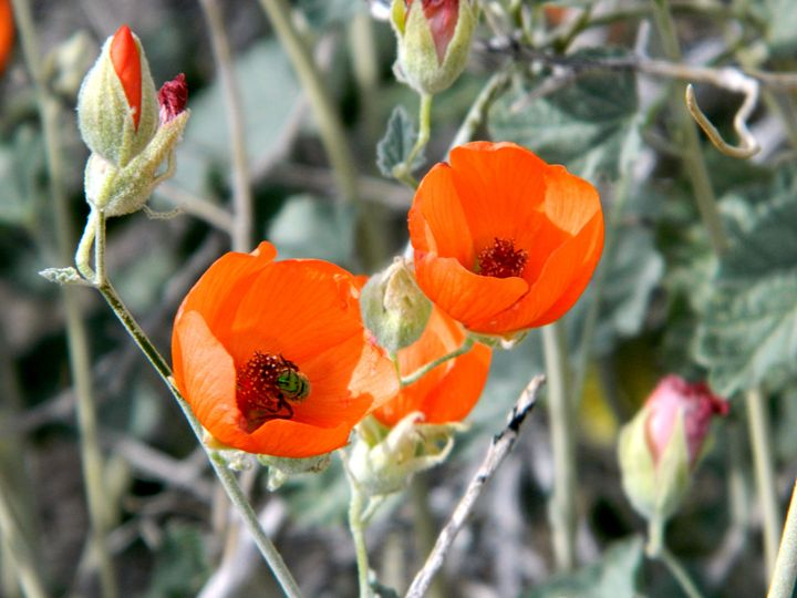 The Desert Wildflowers - Markell Smith Gallery