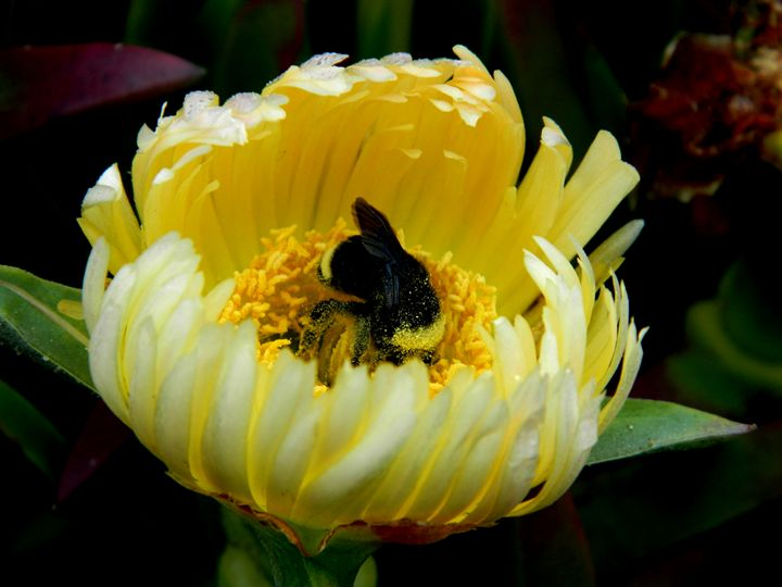 The Pollinator - Markell Smith Gallery