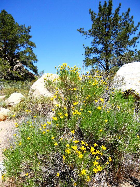 Desert Wildflowers - Markell Smith Gallery
