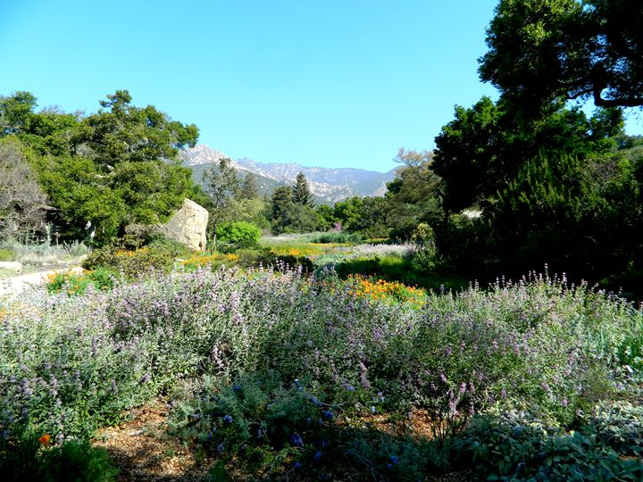 Botanical Garden in Santa Barbara - Markell Smith Gallery