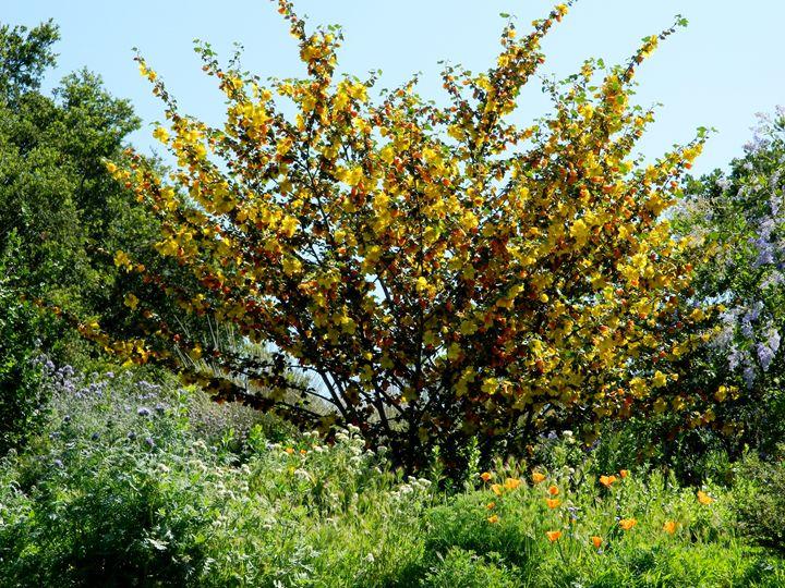 Blossom Tree - Markell Smith Gallery