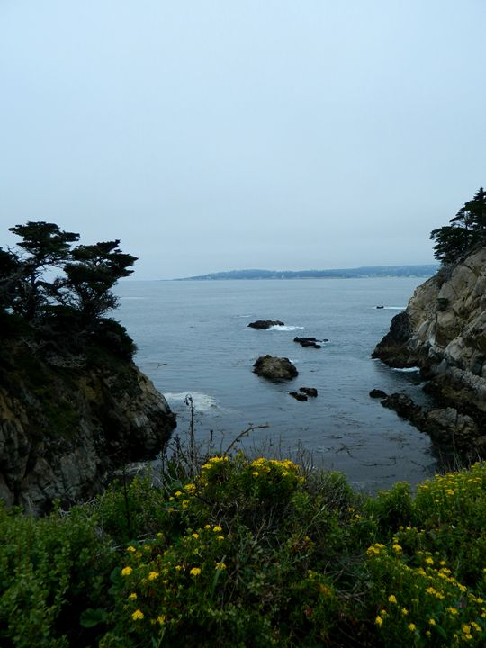 The Point Lobos Cove - Markell Smith Gallery