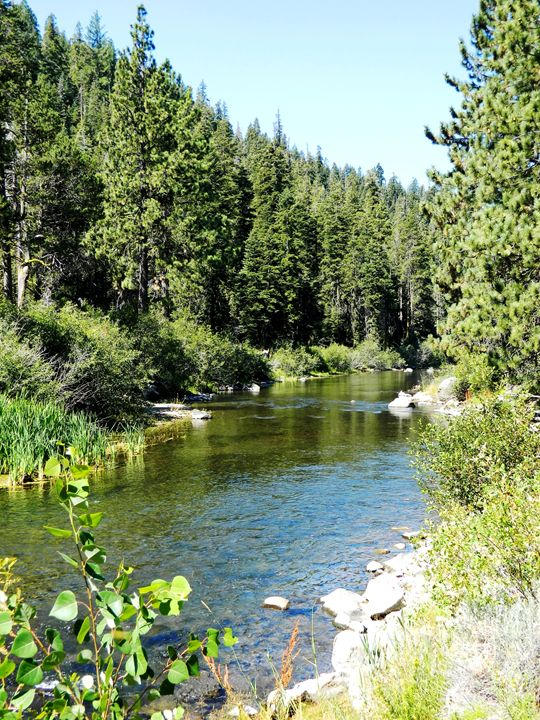 The Truckee River - Markell Smith Gallery