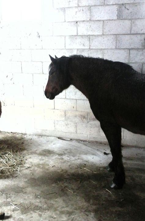 Horse bad day - Tempia