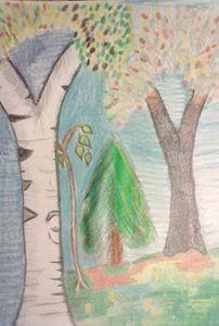 Birch Pine BlackCherry