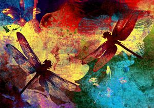 Dragonflies and Orchids