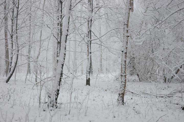 White wood - eriktanghe