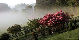 Foggy Mountain Morning - D. Raymond-Wryhte