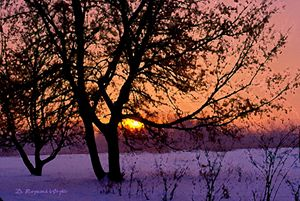 Winter Sunrise - D. Raymond-Wryhte