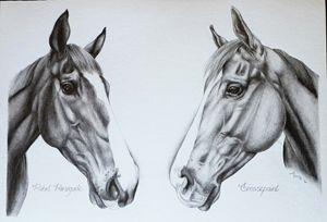 Double Equine Portrait