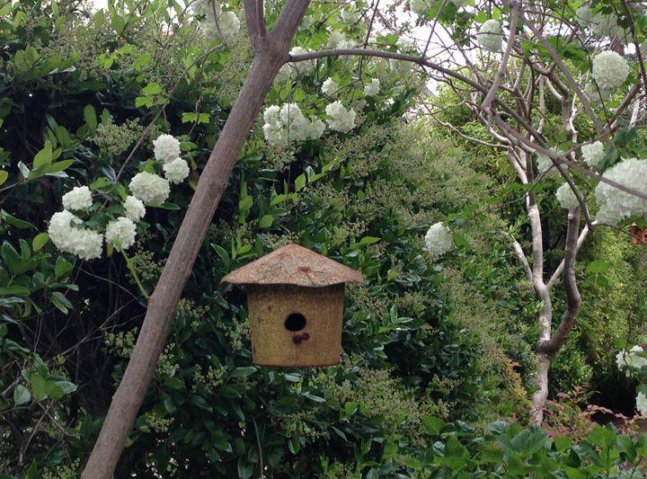 Bird House 1 - Andrea Rt