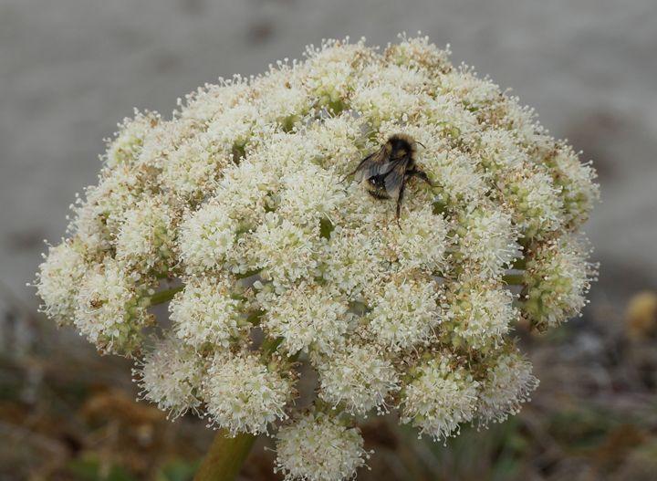 Wild Flower 3 - Andrea Rt