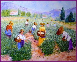 la cueillette du jasmin