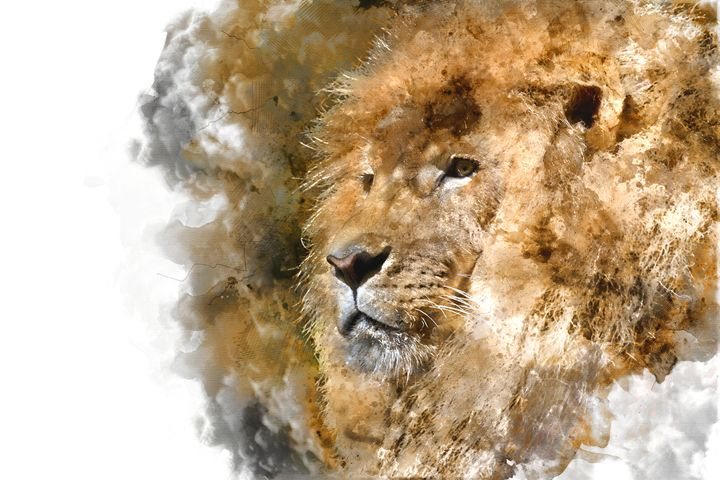 Lion king - Tallefarro