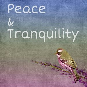 Peace and Tranquility - Buddha's Art Shop