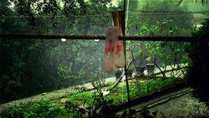 Rain and clip