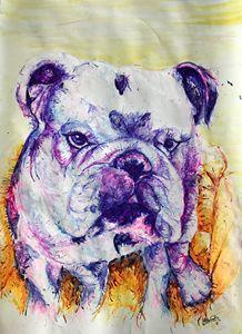 British Bulldog 2