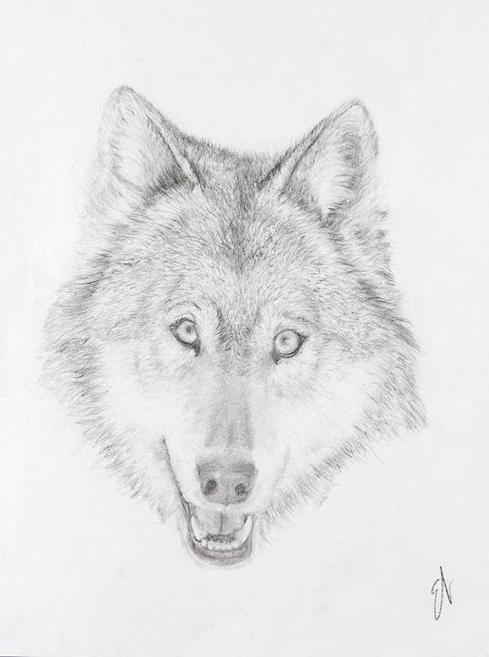 Wolf Head Drawing - Emma's Art