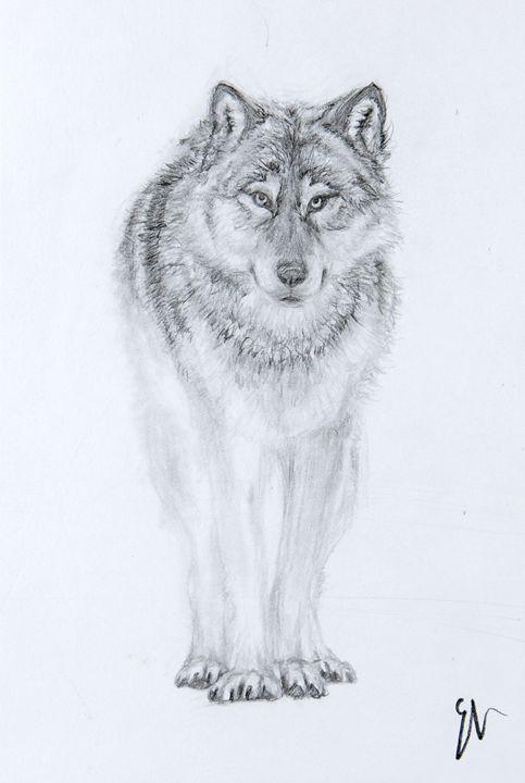 Curious Wolf - Emma's Art