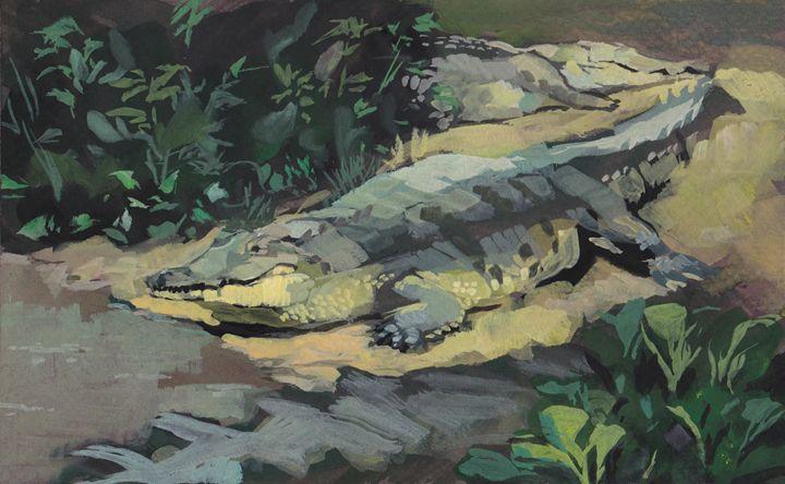 Orinoco crocodile - Romeroleo