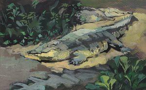 Orinoco crocodile