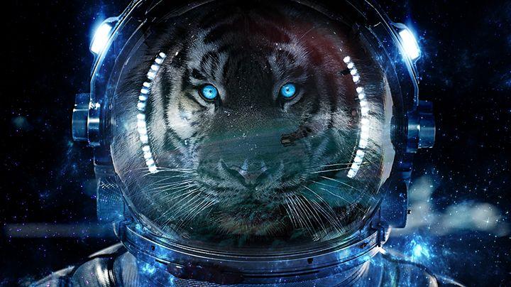 Tigernaut - Byron Gilbert