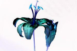 The bluebloom