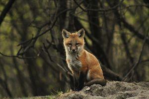 Photogenic Baby Fox - Colleen Mitchell Photography