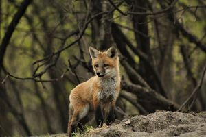 On the Lookout - Colleen Mitchell Photography