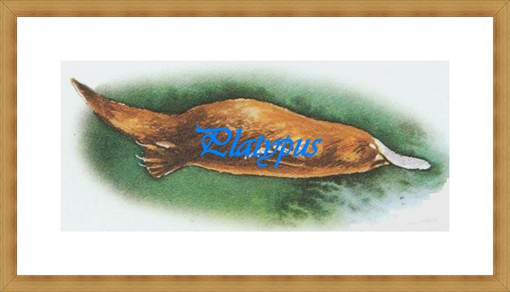 Platypus - Matrix Collection