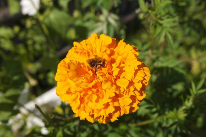 Bee on the flower - Vaidoto art