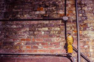 Bird & Brick