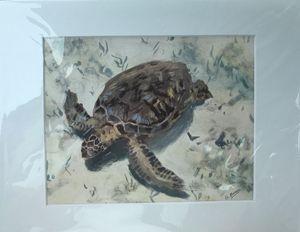 Turtle Bottom